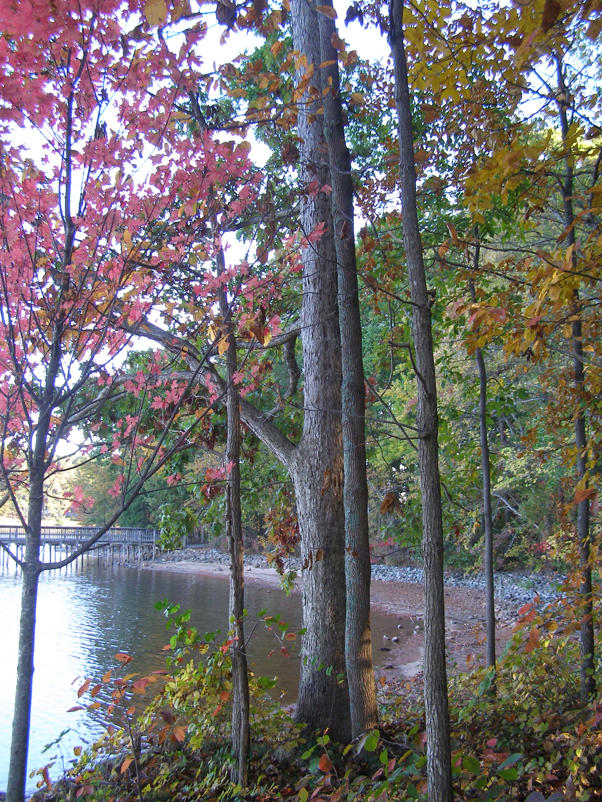 Jetton Park, Lake Norman